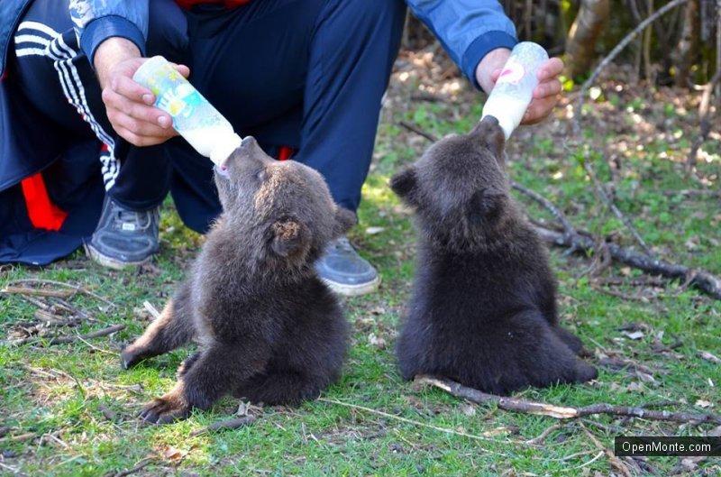 Новости Черногории: Рядом с Подгорицей работает реабилитационный, где дети могут увидеть диких животных и птиц