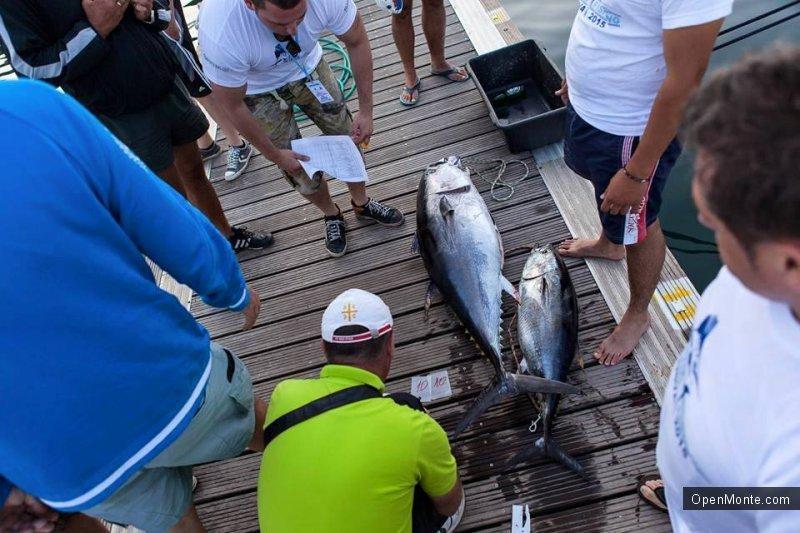 Фото Черногории: «Big game fishing Budva» в Черногории: нереальной красоты и величины тунцы в фото и видео