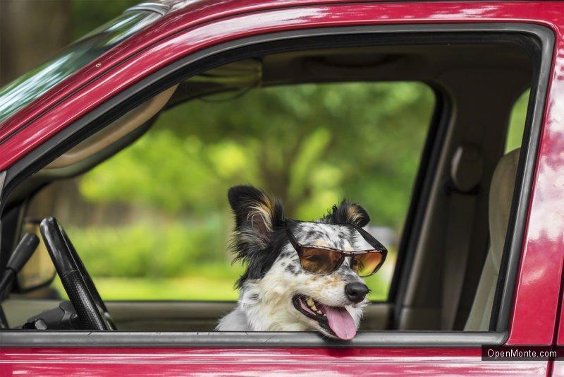 Это интересно: О Черногории: Собака выехала на тракторе на оживленную трассу в Шотландии
