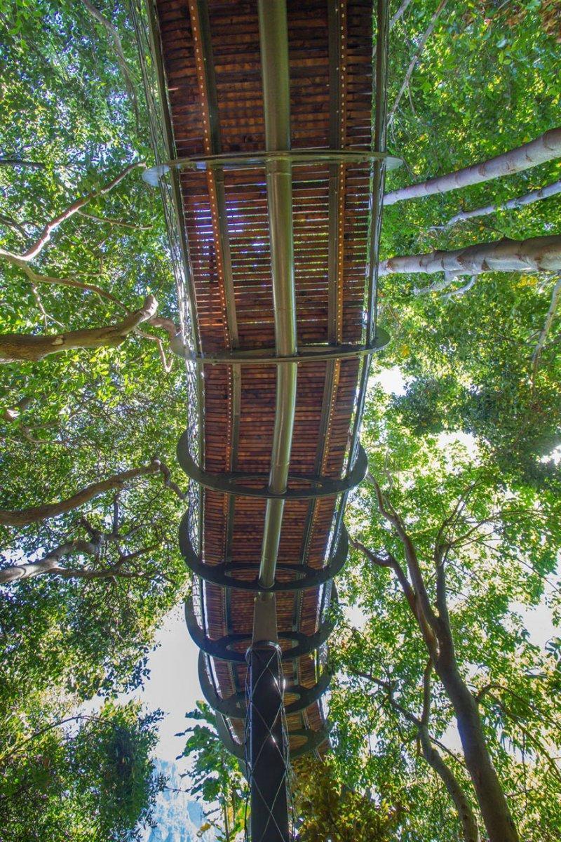 Это интересно: Прогулка над кронами деревьев