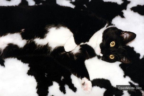 Это интересно: Коты, способные спрятаться на ровном месте