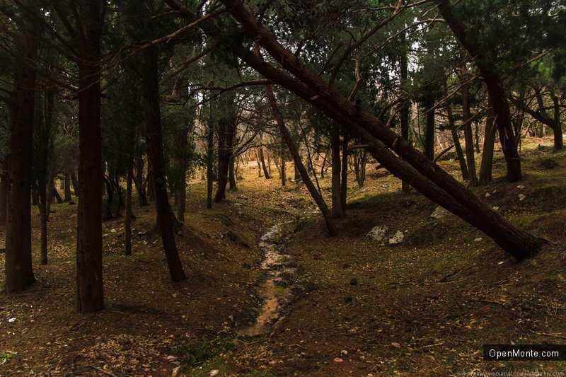 Фото Черногории: Окрестности Св. Стефана, дождливый день и энты в фотографиях Виля Равилова