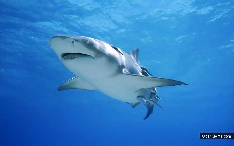 Проживание в Черногории: Отдых в Черногории: Белые акулы на Адриатике: хроника нападений на людей
