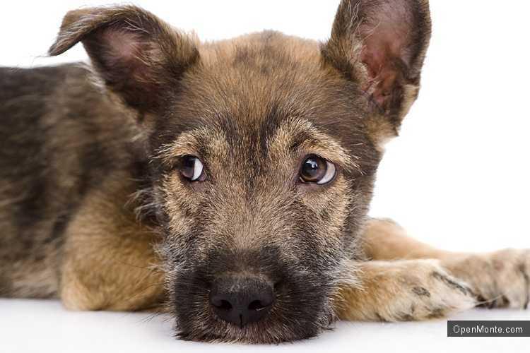 Новости Черногории: В Будве пройдет выставка дворовых собак