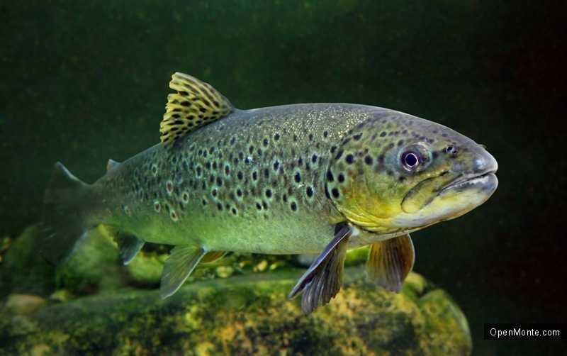 Новости Черногории: В Пивском озере начал резко уменьшатся рыбный фонд