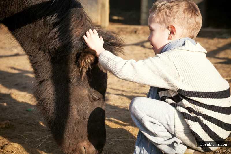Новости Черногории: Рядом с Подгорицей открылся конный клуб