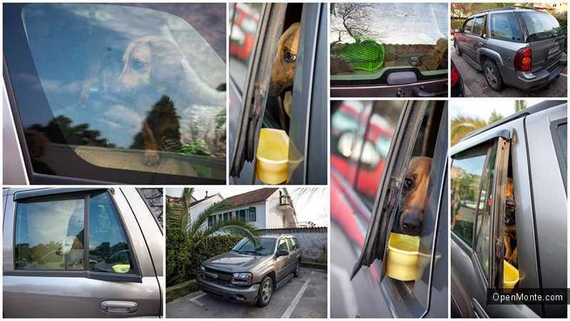 Новости Черногории: В Тивате спасли брошенных в машине собак