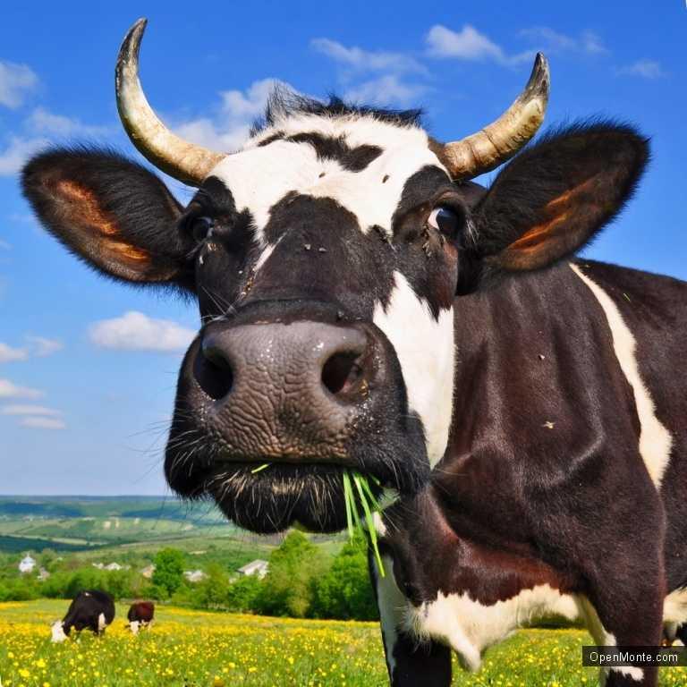 Новости Черногории: В Черногории выделят регион для производства органических продуктов