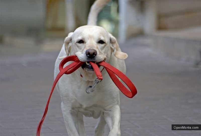 Новости Черногории: Выгул собак в Подгорице без поводка будет наказан
