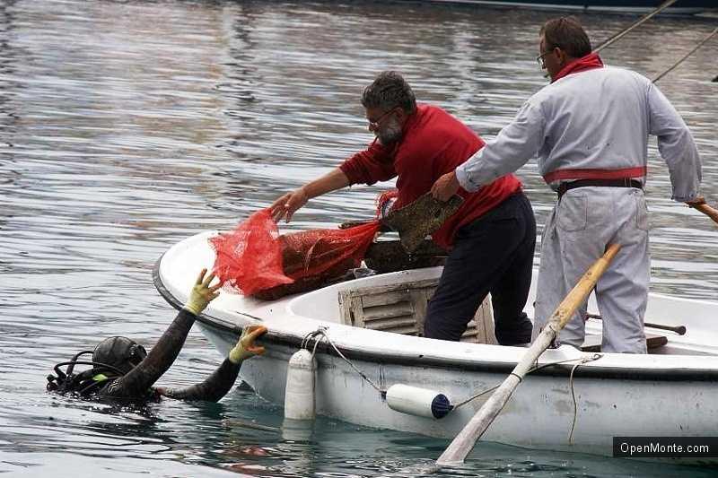 Новости Черногории: В Черногории проведена очистка морского дна