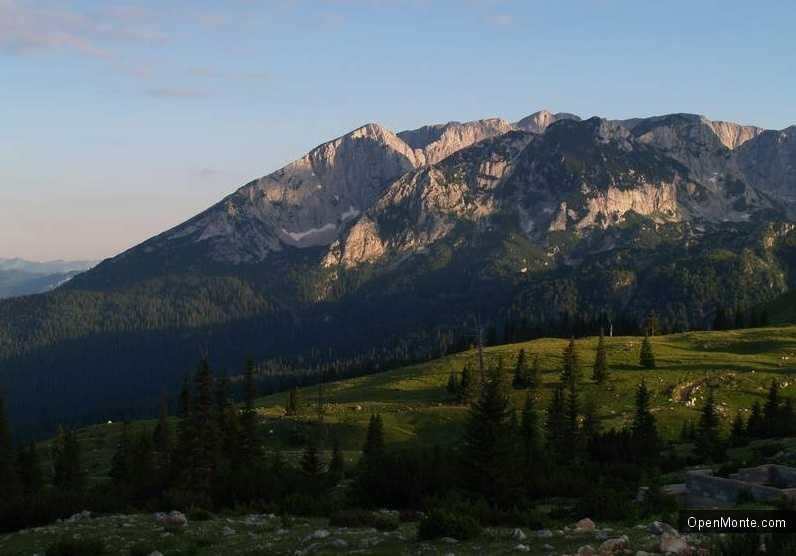 Проживание в Черногории: Грибы в Черногории
