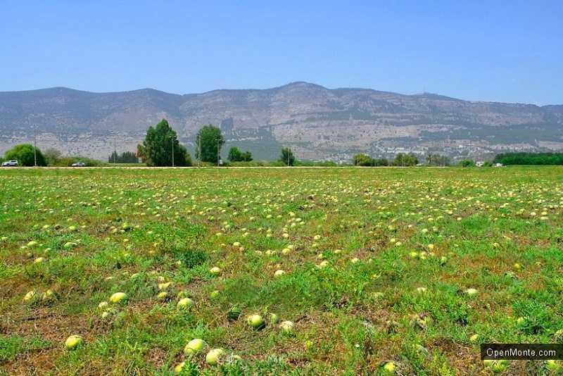 О Черногории: Сельское хозяйство в Черногории
