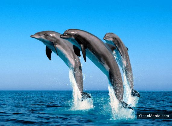 Новости Черногории: Дельфины снова у берегов Черногории: узнайте, где можно их встретить